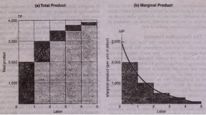 Total Average and Marginal Product